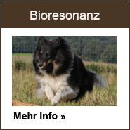 Erfahren Sie mehr zur Bioresonanz