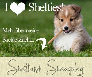 Besuchen Sie auch meine Sheltie-Zucht im Internet!